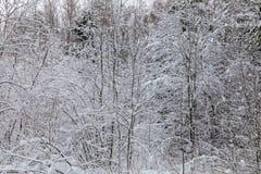 El fondo hermoso blanco del invierno de las ramas de los árboles en el bosque o en el parque debajo de la nieve imagenes de archivo