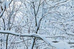 El fondo hermoso blanco del invierno de las ramas de los árboles en el bosque o en el parque debajo de la nieve imágenes de archivo libres de regalías