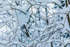 El fondo hermoso blanco del invierno de las ramas de los árboles en el bosque o en el parque debajo de la nieve fotos de archivo libres de regalías