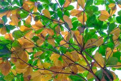 El fondo hermoso del verde y hojas y ramas del amarillo Fotos de archivo libres de regalías