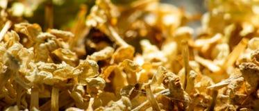 El fondo horizontal con las flores amarillas secadas de la lila es macro fotos de archivo