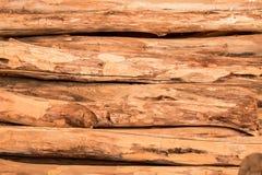 El fondo inconsútil de madera con los tocones, árbol corta, los registros, fondo de la ecología Fotografía de archivo