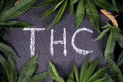 El fondo médico de la marijuana con el cáñamo sale de THC que enmarca imagenes de archivo