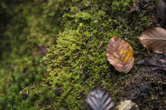 El fondo mínimo de la naturaleza con marrón del otoño se va y verde moje Fotografía de archivo