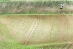 El fondo/el modelo con las curvas del balanceo ondulado texturizó el fi rural imagen de archivo libre de regalías