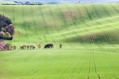 El fondo/el modelo con las curvas del balanceo ondulado texturizó el fi rural fotos de archivo libres de regalías