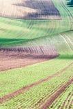 El fondo/el modelo con las curvas del balanceo ondulado texturizó el fi rural imágenes de archivo libres de regalías