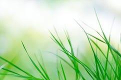 El fondo natural de las cuchillas de la hierba verde se cierra para arriba Foto de archivo libre de regalías
