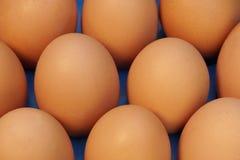 El fondo orgánico fresco de diez huevos, XXXL se cierra para arriba. Imagenes de archivo