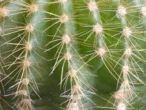 El fondo para la presentación del cactus verde espinoso foto de archivo libre de regalías