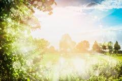 El fondo precioso de la naturaleza del verano con follaje, el cielo, el campo y el sol de los árboles irradia, al aire libre Fotos de archivo
