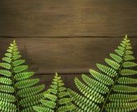 El fondo realista del verano con el helecho verde hojea en textura de madera Aventura que acampa al aire libre Modelo del diseño ilustración del vector