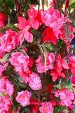 El fondo rosado de la flor Fotos de archivo libres de regalías