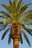 El fondo tropical de la palma perfecta Imágenes de archivo libres de regalías