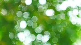 El fondo verde del extracto de la naturaleza del viento de la hoja sopla en el bosque, bokeh verde fuera del fondo del foco del b almacen de metraje de vídeo