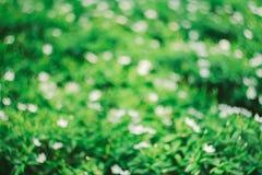 El fondo verde hermoso del bokeh Foto de archivo