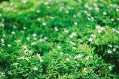 El fondo verde hermoso del bokeh Fotografía de archivo