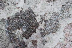 El fondo y la textura del mineral de carbonato dejado por la agua corriente en el castillo del algodón, Pamukkale imagen de archivo