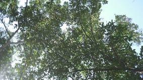 El Forest Green deja árboles sobre fondo del cielo azul metrajes