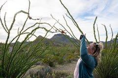 El fot?grafo de la mujer toma las fotos de un cactus floreciente del Ocotillo con su tel?fono elegante imágenes de archivo libres de regalías