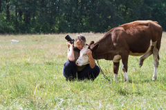 El fotógrafo de sexo femenino acaricia a vacas del becerro imágenes de archivo libres de regalías