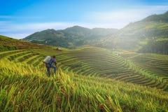 El fotógrafo que toma la foto del arroz coloca en colgante con de madera imagenes de archivo
