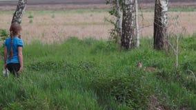 El Fox de su agujero con un zorro almacen de video
