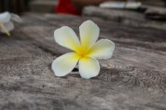 El Frangipani florece blanco y amarillo Fondo en la tabla de madera vieja Foto de archivo
