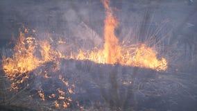El fuego consume la hierba seca en la orilla del río almacen de video