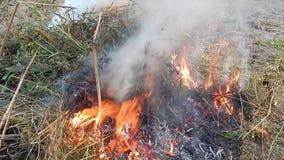 El fuego del fuego quema las ramitas almacen de video