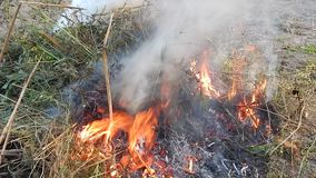 El fuego del fuego quema las ramitas metrajes