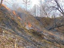 El fuego en la cuesta de un barranco demasiado grande para su edad con la hierba y los árboles Imagen de archivo