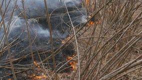El fuego salvaje peligroso en naturaleza, quema la hierba seca Hierba negra quemada en el claro del bosque metrajes