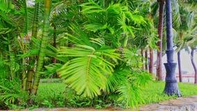 El fuerte viento sacude ramas bajas de las palmas grandes en parque almacen de metraje de vídeo