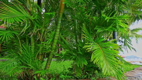 El fuerte viento sacude ramas bajas de las palmas grandes en parque almacen de video