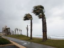 El fuerte viento sopla del mar y dobla las palmas en la costa Imágenes de archivo libres de regalías
