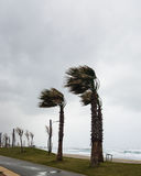 El fuerte viento sopla del mar y dobla las palmas en la costa Imagenes de archivo