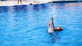 El funcionamiento de los delfínes en dolphinarium metrajes