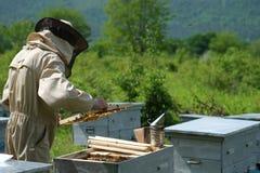 El funcionamiento del apicultor recoge la miel apiary Concepto de la apicultura imagen de archivo libre de regalías