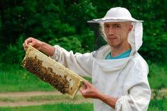 El funcionamiento del apicultor recoge la miel Apicultor que sostiene un panal lleno de abejas Concepto de la apicultura Foto de archivo libre de regalías