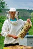 El funcionamiento del apicultor recoge la miel Apicultor que sostiene un panal lleno de abejas Concepto de la apicultura Fotos de archivo libres de regalías