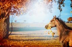 El funcionamiento del caballo y mantiene boca una rama con las hojas en fondo hermoso de la naturaleza del otoño con el árbol y e Foto de archivo