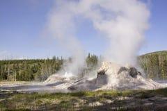 El géiser del castillo en Yellowstone Fotografía de archivo