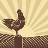 El gallo cantó en campos de granja contra el sol naciente libre illustration