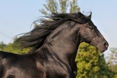 El galope negro libre de la corrida del caballo Fotografía de archivo libre de regalías