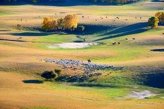 El ganadero y las ovejas en la pradera Fotografía de archivo