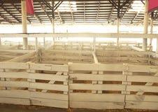 Paradas del ganado Fotografía de archivo
