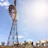El ganado coloca, Queensland del noroeste Foto de archivo libre de regalías