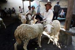 El ganado comercializa Fotos de archivo