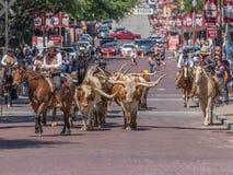 El ganado conduce valor del pie imagen de archivo